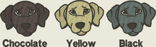 Labrador colour choice