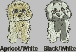 Cavachon colour choice