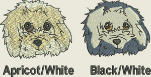 Cavachon Head Colours