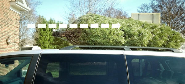 How to tie down a christmas tree to your car 2