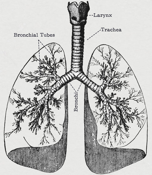 The bronchial tubes are sensitive to cold air and constrict decreasing the amount of oxygen take-in per breath.