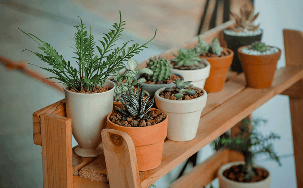 connecting with nature, house plants, plants, really great goods, stephanie ablett