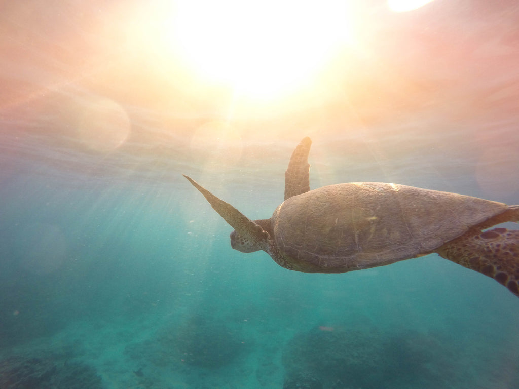 turtle swimming in ocean with sun rays behind, colourful ocean water