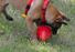 Jolly Pets Jolly Red Egg Dog Toy