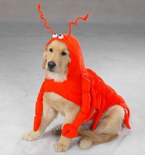 Lobster Paws Dog Costume