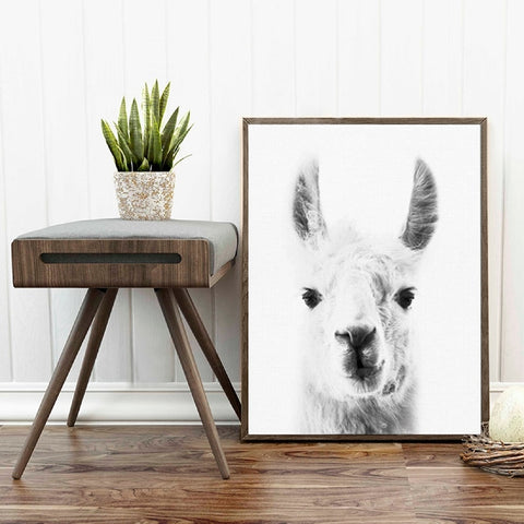 Llama Wall Art Canvas Posters