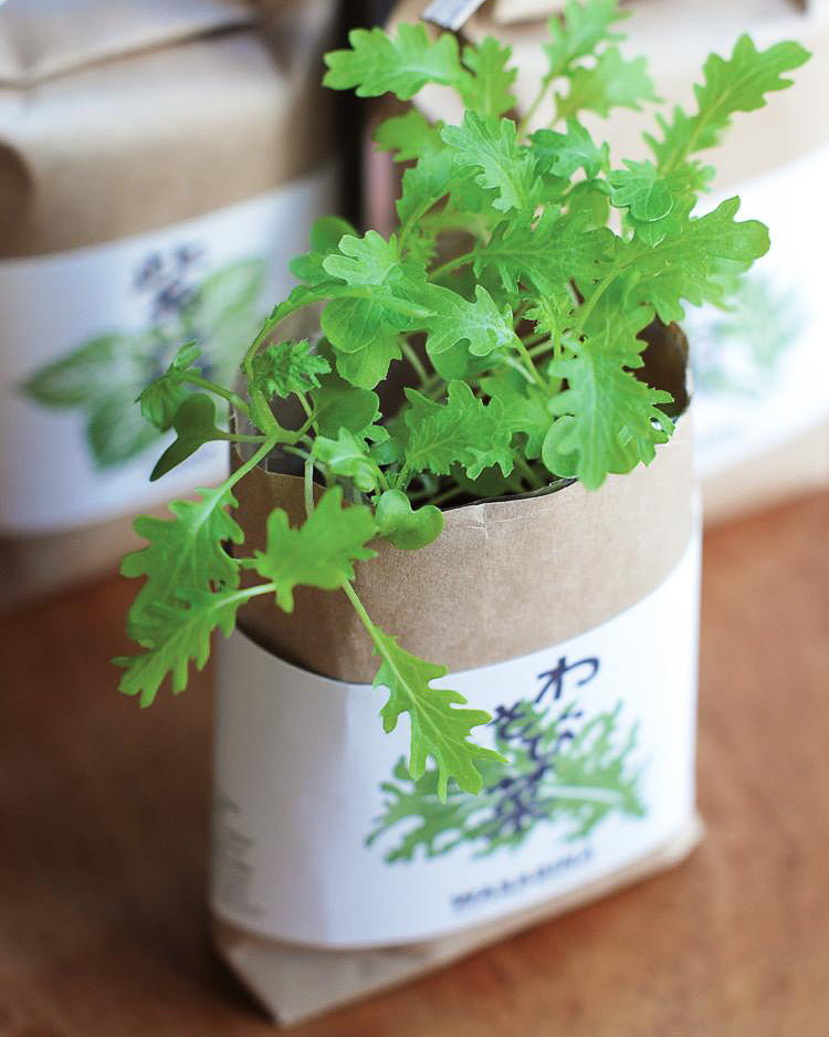 Cultivate & Eat Japanese Herbs: Mustard Greens