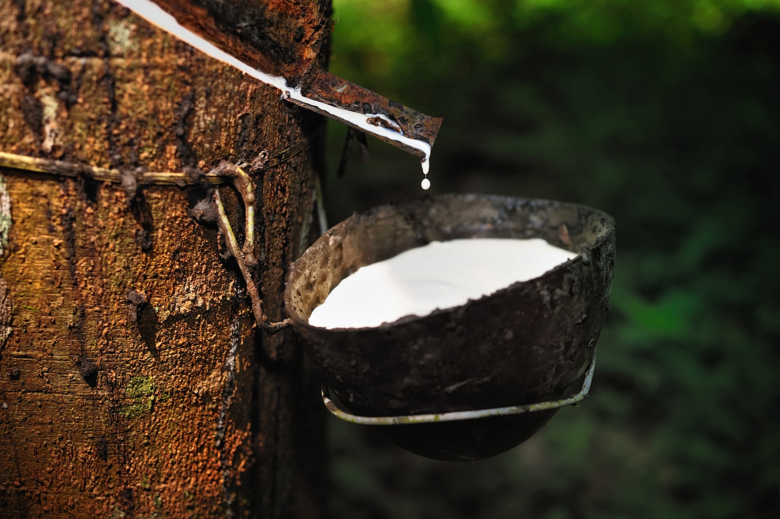 Natural Tree Rubber
