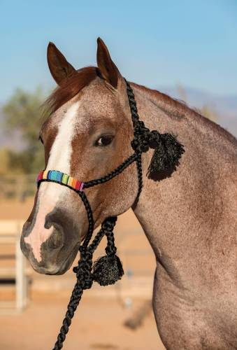 Professional's Choice Cowboy Braided Black Halter and Lead
