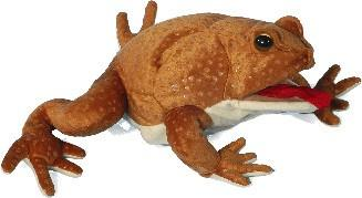"12"" Marine Toad Puppet - Puppethut"