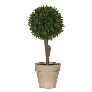 Miniature Boxwood Ball Plant in Stone-look Pot