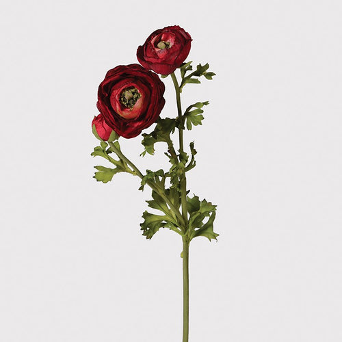Ranunculus Stem - Deep Red
