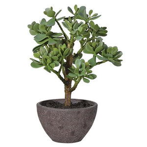 Green Money Tree in Textured Pot