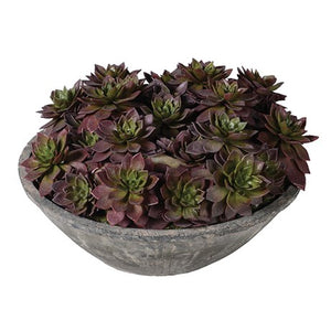 Echeveria Plants in Grey Cement Bowl