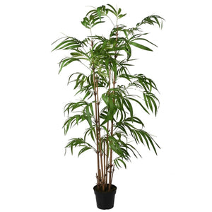 Tall Bamboo Plant in Pot