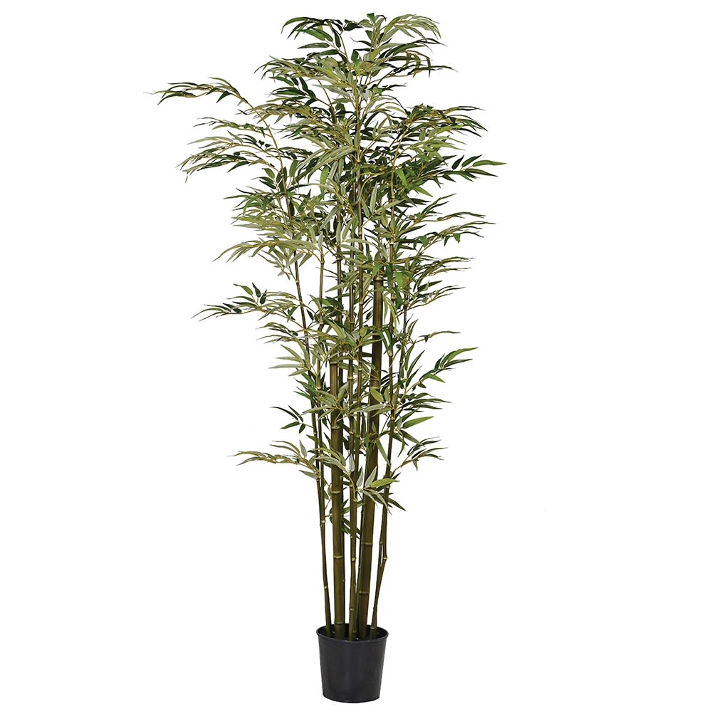 Green Multi Stem Bamboo Tree in Pot