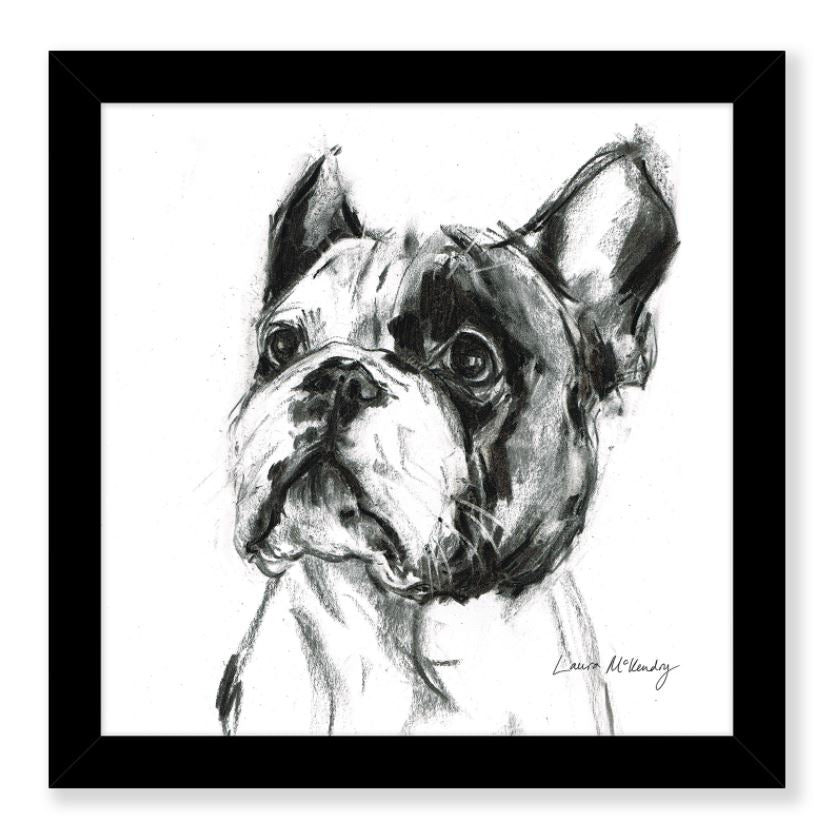 Frenchie the French Bulldog