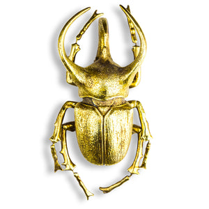 Golden Beetle Wall decor
