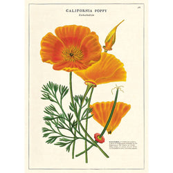 CALIFORNIA POPPY WRAP