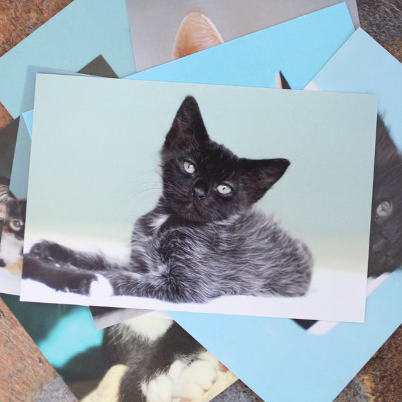Foster Kitten Postcards Set of 10