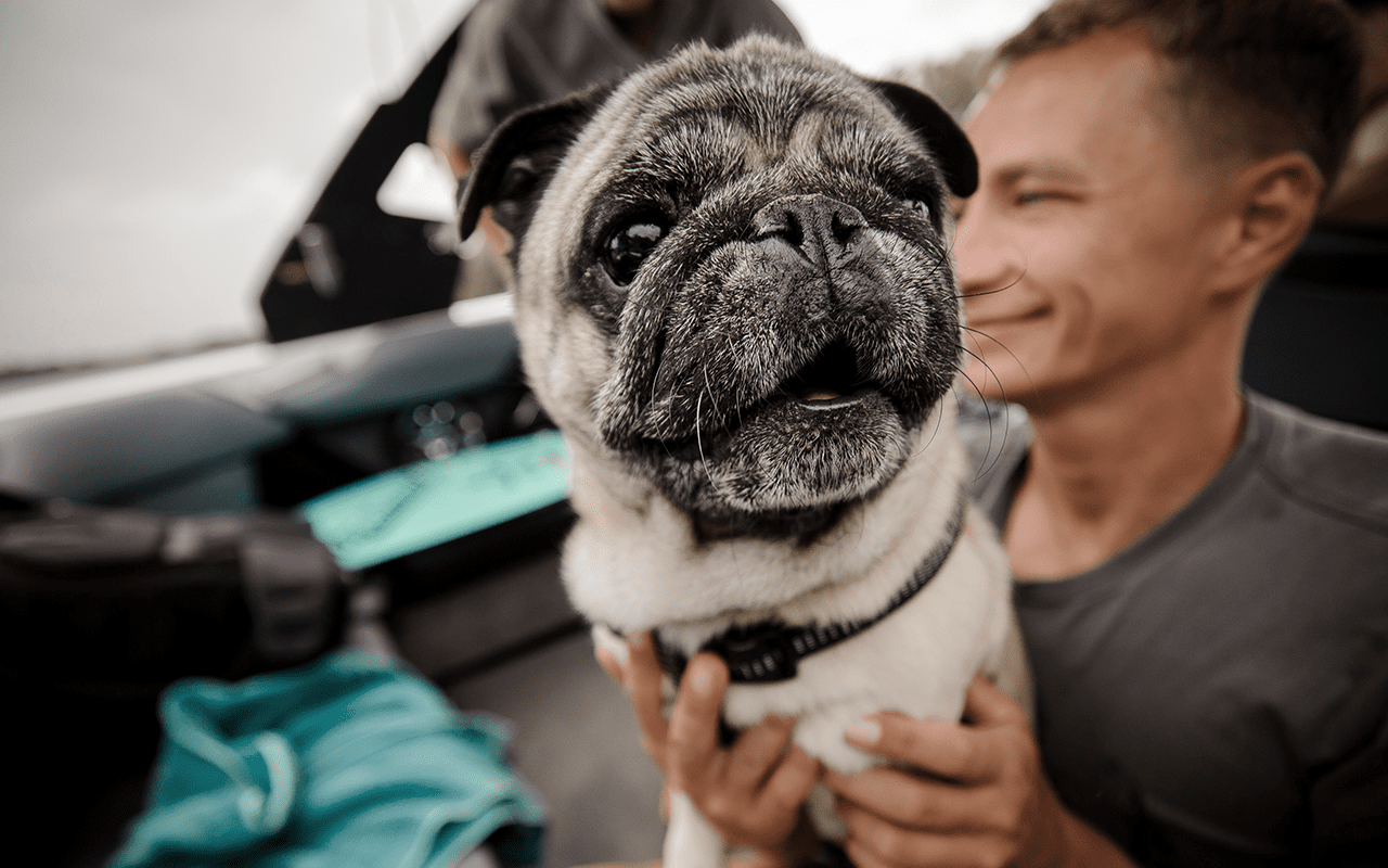 cute pug and boy in car, prevent gum disease in dogs, loose teeth, best pet toothpaste, happy pet