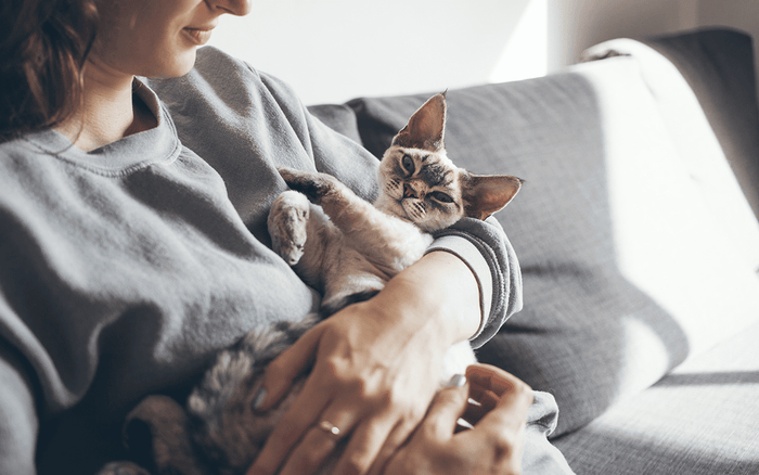 women with cat, pussycat, grey couch, happy healthy cat, snuggle with kitten, healthy kitten teeth