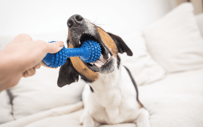 safe pet toys, dental toys for dogs, petsmile toothpaste, dog toys, healthy mouth, dog chewing on toy