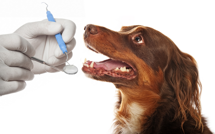 Pet Dental Month: How to Make Toothbrush Time A Breeze