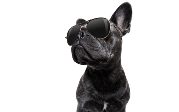 trendy dog, top trends pet care, healthy pets, dog teeth, healthy food, dog with sunglasses