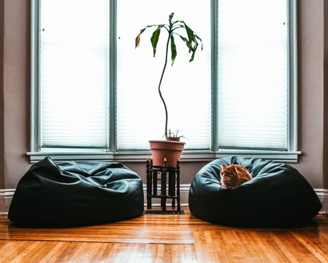 cozy room with cat on a bean bag