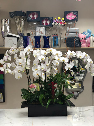 White Orchid Paradise