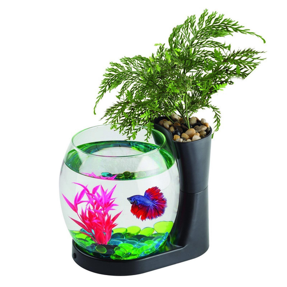 Blue Planet Betta Planter Black 2.8L Glass Bowl Fish Tank With Plant Aquarium
