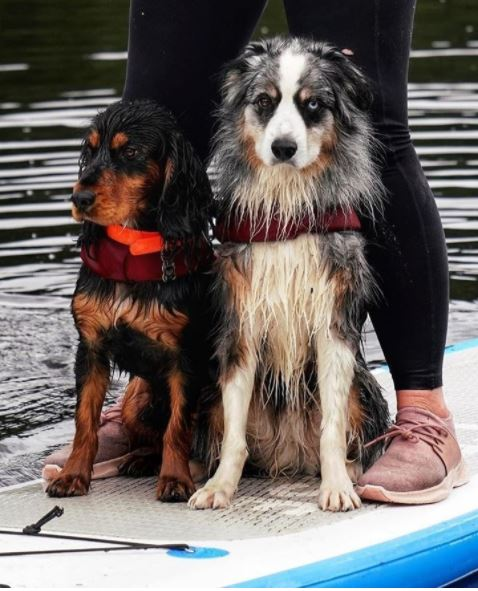 A woman wearing her Vessi Dusty Rose Everyday Sneakers while paddle boarding with two dogs