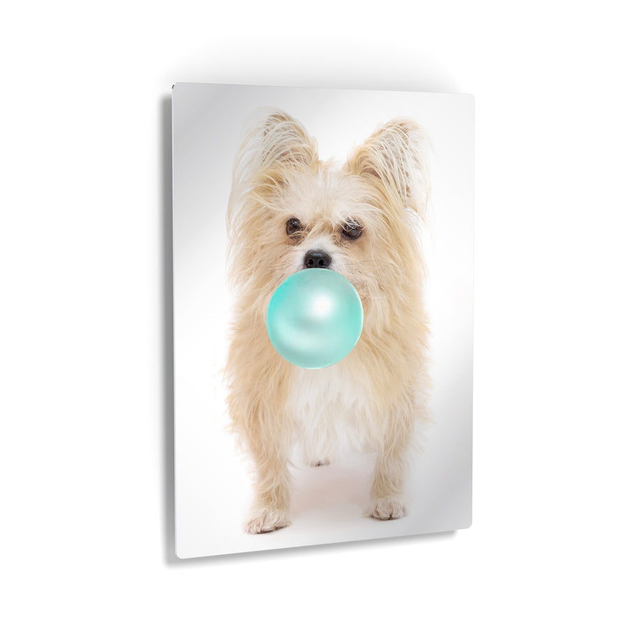Yorkshire Terrier Bubble Gum Canvas Print Metal Print