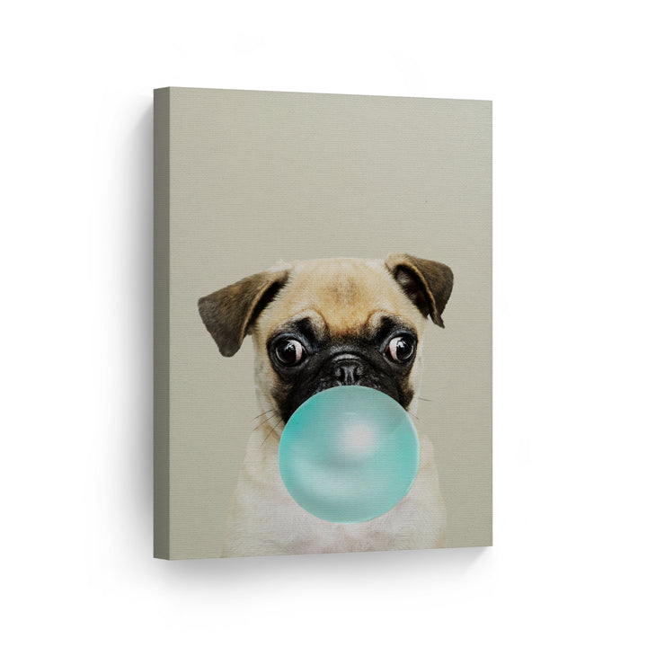 Pug Dog Bubble Gum Canvas Print Metal Print