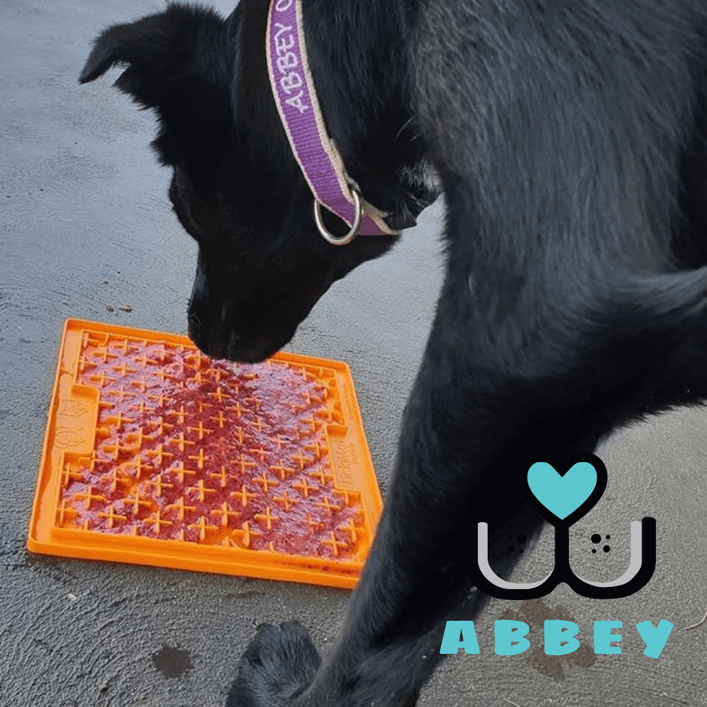 LickiMat Buddy Customer Abbey Dog Licking Mat