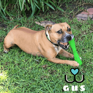 Outward Hound Bionic Tough Urban Stick Tough Dog Toy - Customer Gus