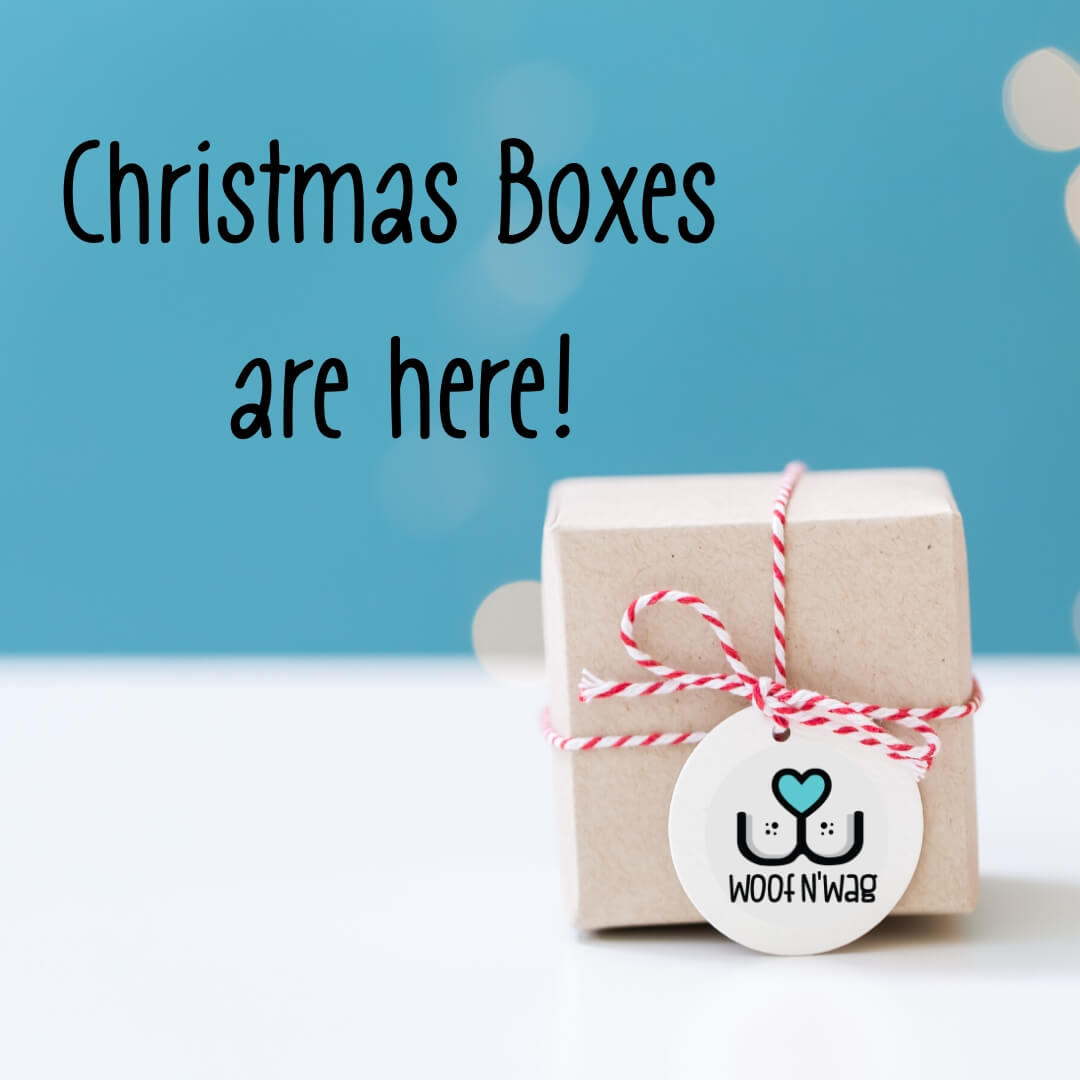 🎁 Christmas Box - B - Medium / Small Dog 🎁