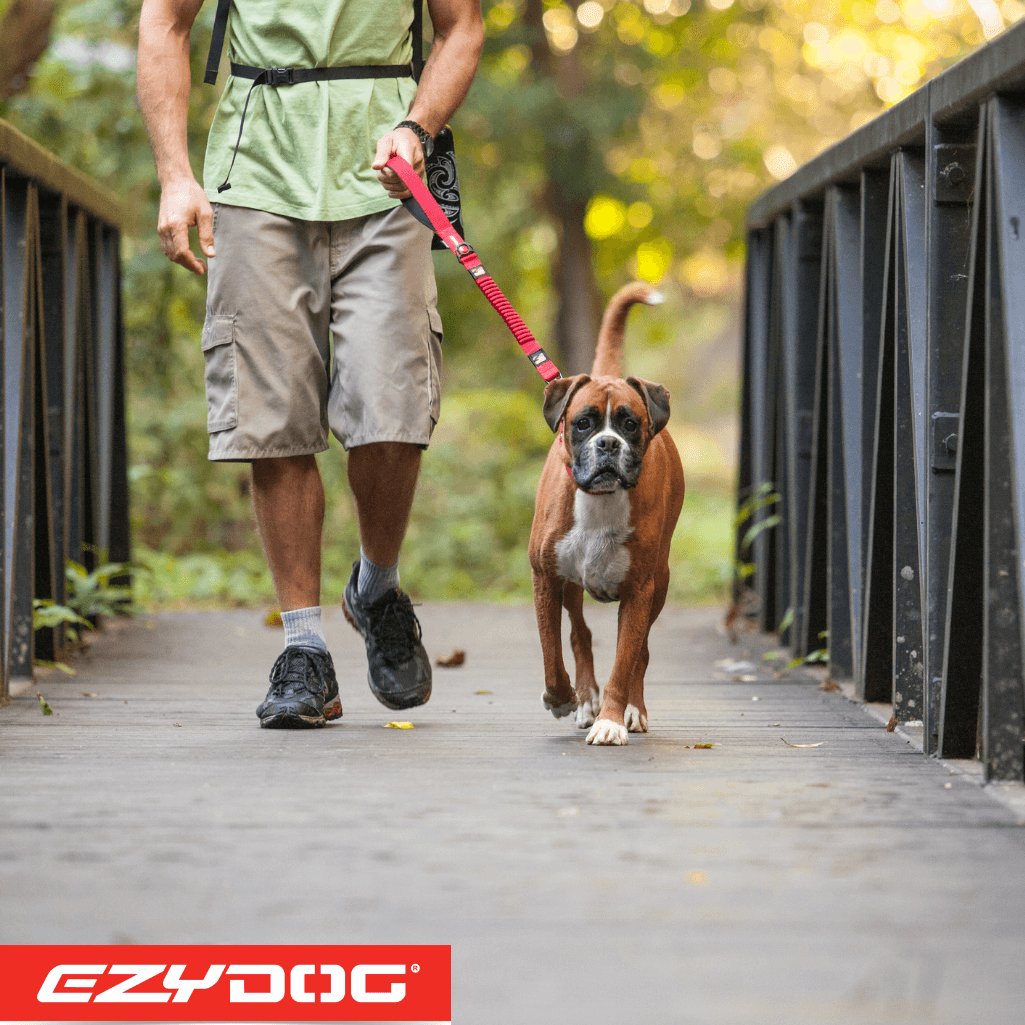 EzyDog Zero Shock Leash In Use | EzyDog Australia