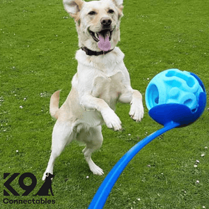 k9 Connectables Australia - The Original Blue Ball playing with labrador