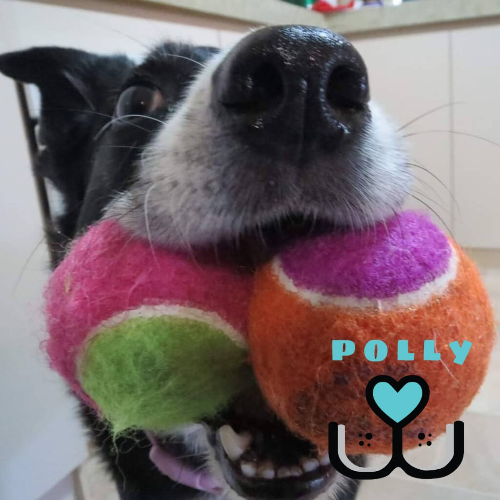 Kong AirDog Birthday Squeaker Balls - Customer Polly