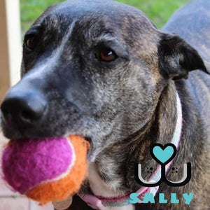 Kong AirDog Birthday Squeaker Balls - Customer Sally