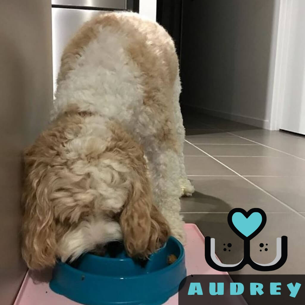 Outward Hound Fun Feeder Slow Feed Dog Bowl Teal Drop Design - Customer Audrey