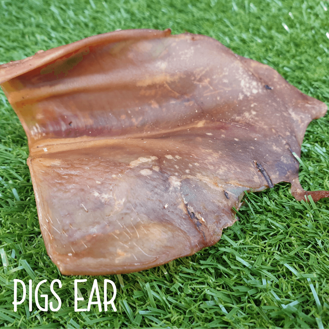 Natural Dog Treats - Pigs Ear