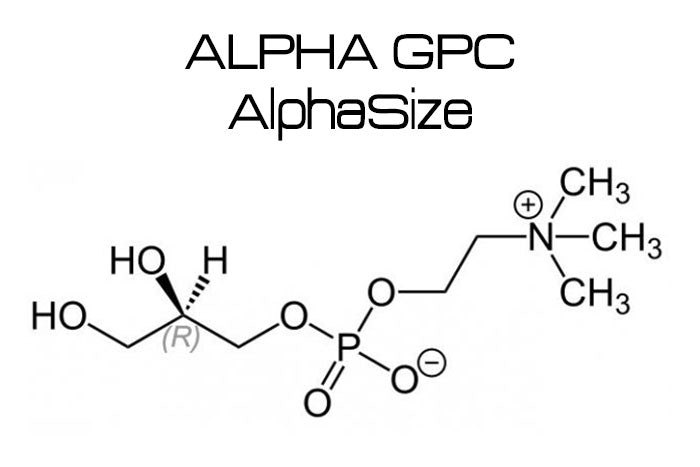 AlphaSize® Alpha-Glyceryl Phosphoryl Choline (A-GPC)