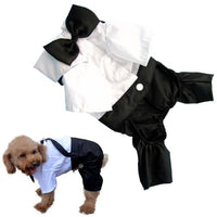 Fashion Dog Clothes