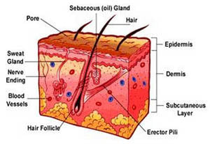 how the derma roller works image