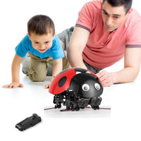 Kimiamrt DIY Ladybug Robot Kit, 2.4GHz RC Robotic DIY Building Set, Intelligent Educational Robot, Science Explorer Toys for Kids