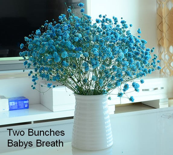 2 bunch blue babys breath