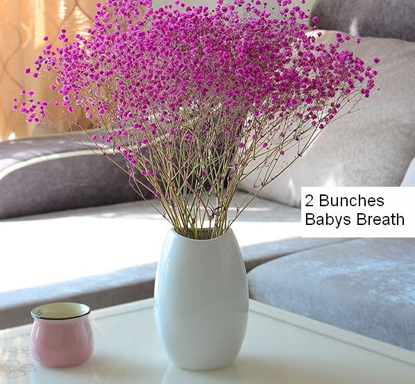 Dried Babys Breath Bunch